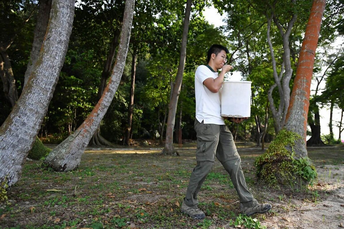 Mr Max Khoo, Manager, carrying the pail of turtle eggs to the turtle hatchery at Sisters' Islands Marine Park on Sept 29, 2018.