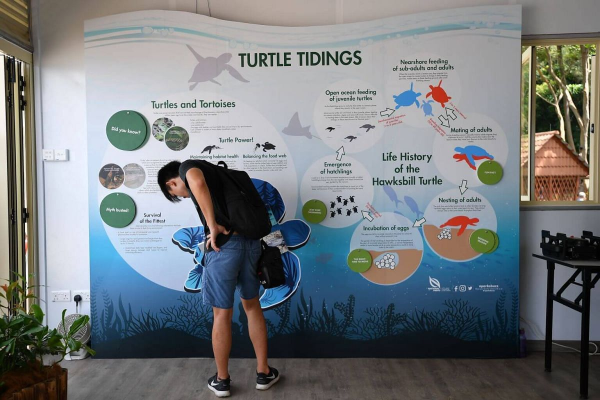 Educational panel on display inside the turtle hatchery during the launch of the turtle hatchery at Sisters' Islands Marine Park on Sept 29, 2018.
