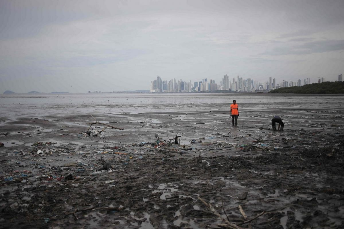 Volunteers take part in a beach cleanup at the Costa del Este mangrove in Panama City on Sept 29, 2019.