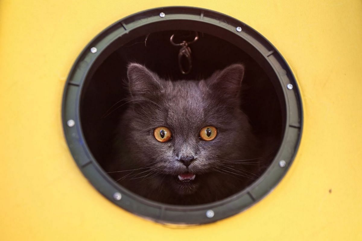 A cat meows while looking out from its carrier as animals and their owners gather at Our Ladies of Remedies Parish in the Malate area of Manila on Oct 6, 2019, for an annual pet blessing ceremony. PHOTO: AFP