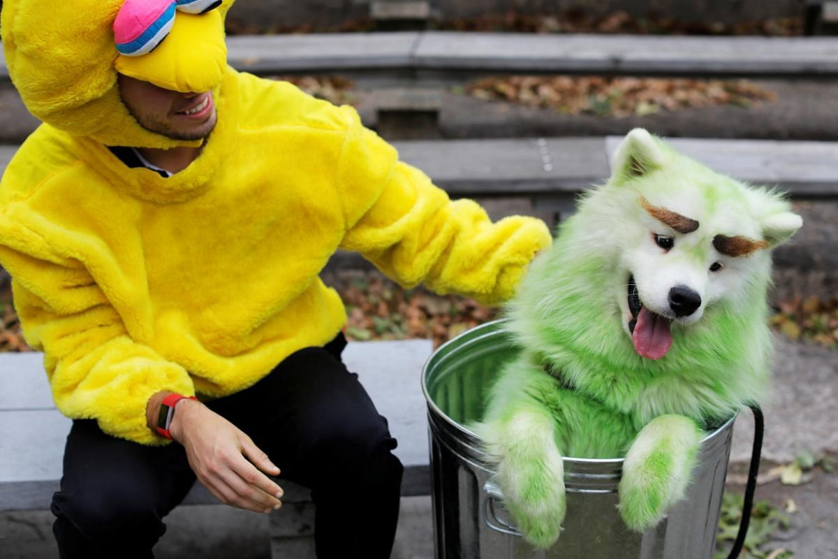 Mark Belio, dressed as Big Bird of Sesame Street, sits with Biff the Samoyed, dressed as Oscar the Grouch, at the Tompkins Square Halloween Dog Parade in Manhattan, New York City, on Oct 20, 2019.