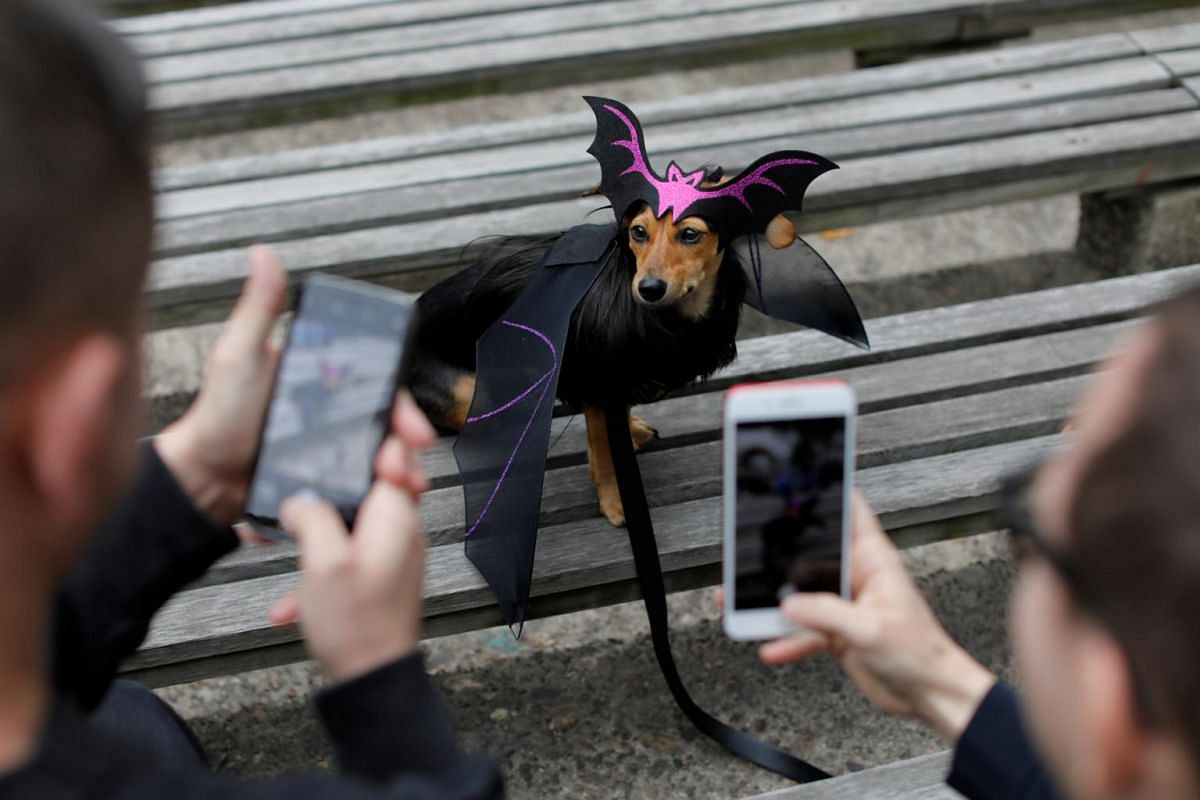 People photograph Dita the Doxle dog, dressed as a bat, at the Tompkins Square Halloween Dog Parade in Manhattan, New York City, on Oct 20, 2019.