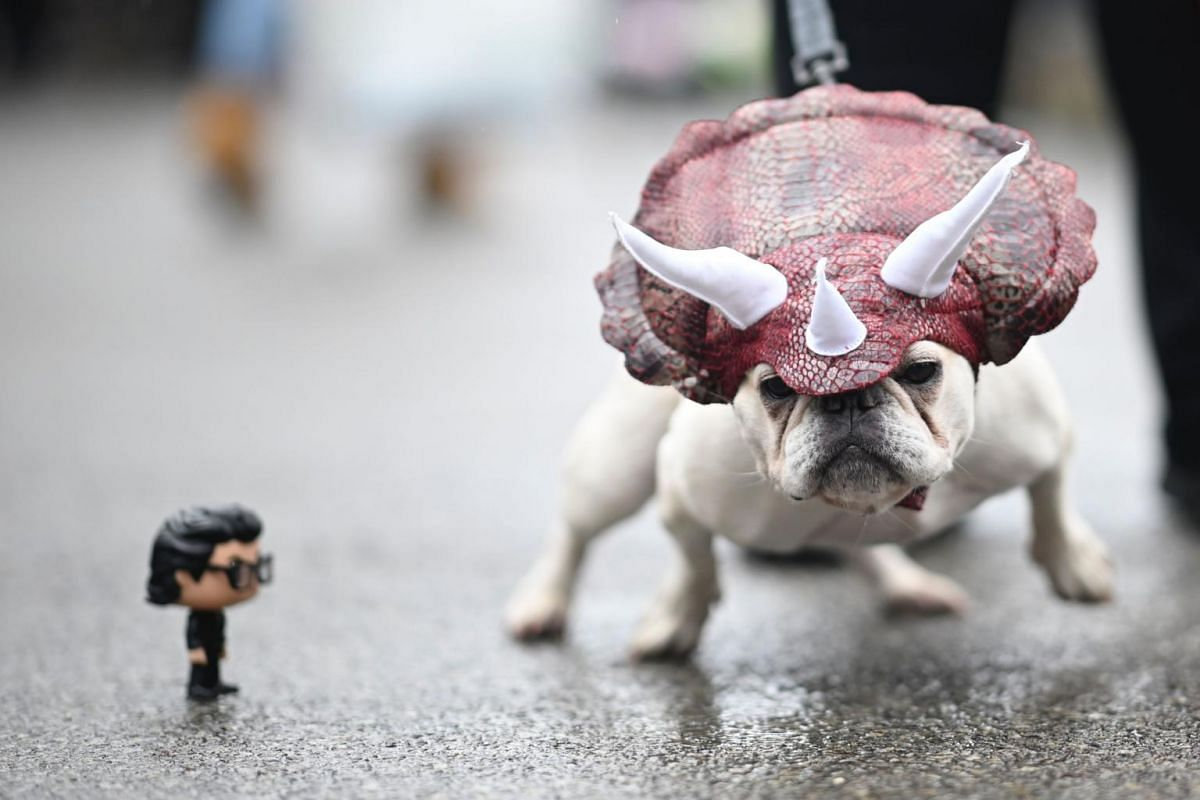 A dog dressed in a dinosaur costume attends the Tompkins Square Halloween Dog Parade in Manhattan, New York City, on Oct 20, 2019.