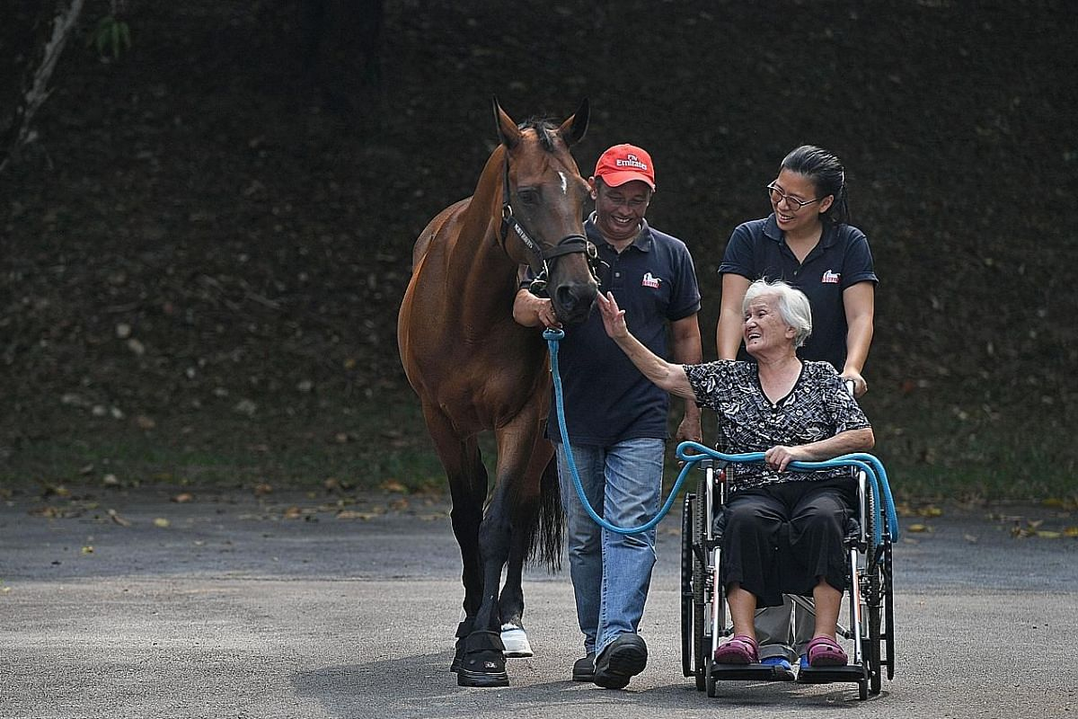 St Theresa's Home resident Agatha Lee (in the wheelchair) moving around with one of Equal-Ark Singapore's horses, Costera.