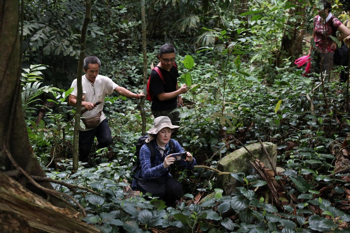 """""""Come I show you, this one special,"""" Soh Ah Beng (left) would say to Jennifer Lim (in blue) while trekking through the vegetation."""