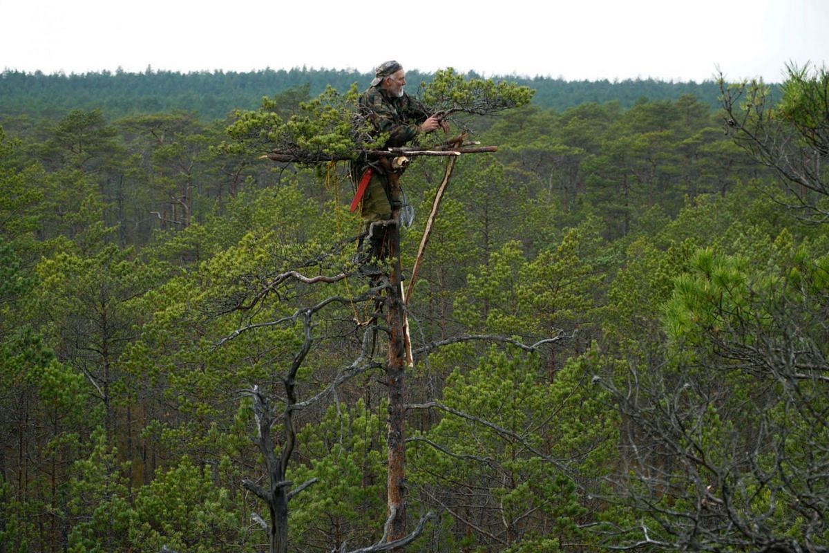Belarusian ornithologist Vladimir Ivanovski, 72, stands on a tree as he builds an artificial nest for birds of prey from tree branches, in a marsh near the village of Kazyany, Belarus October 20, 2019. PHOTO: REUTERS