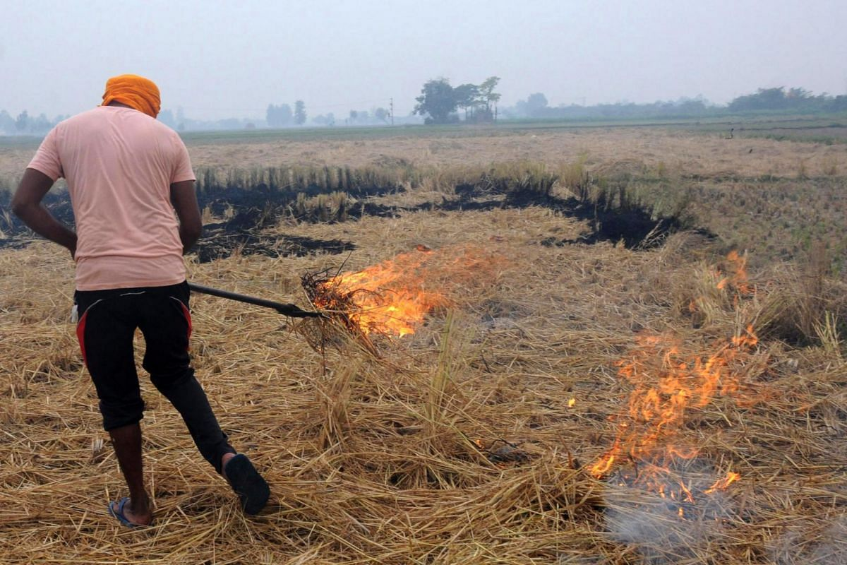 An Indian farmer burns crop stubble in a farm at a village on the outskirts of Amritsar, India, on Nov 2, 2019.