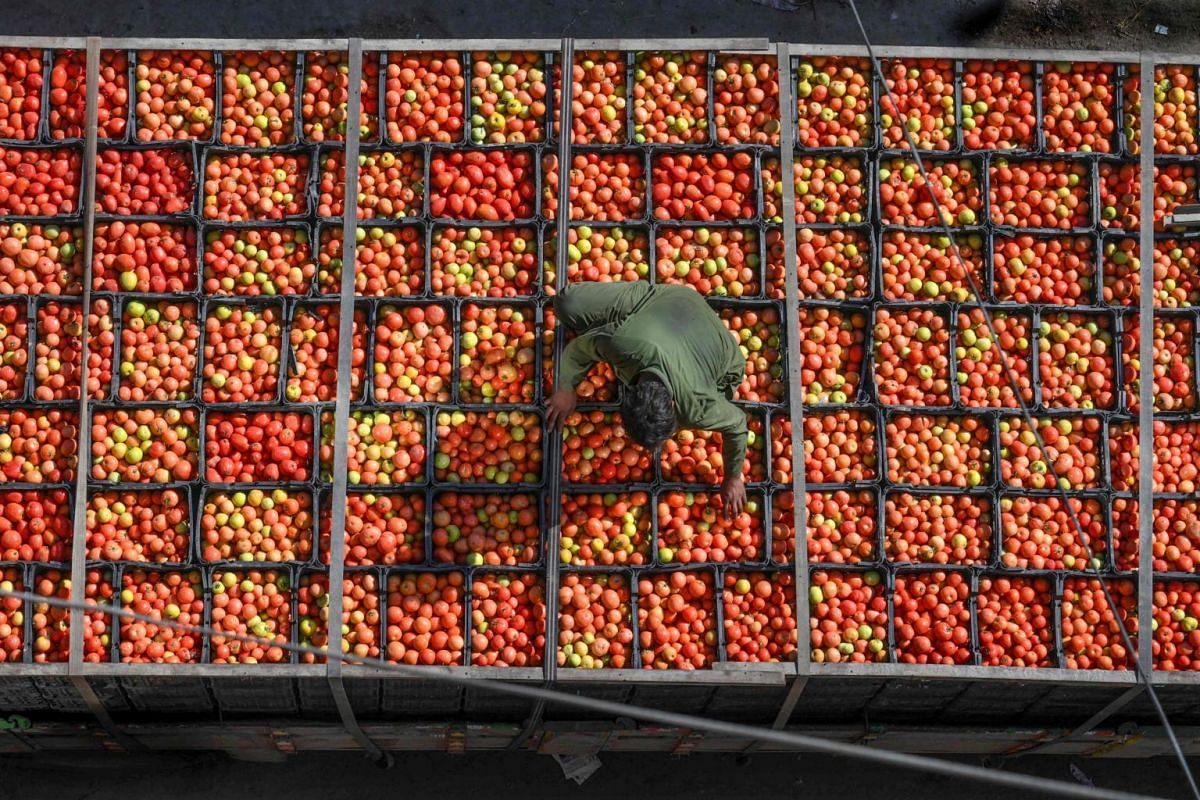 A labourer arranges tomatoes in crates at a market in Lahore, on Nov 24, 2019.