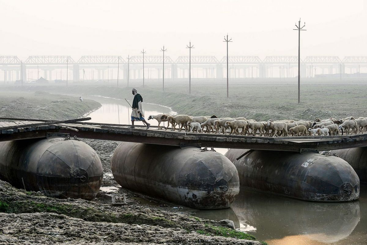 A shepherd leads a flock of sheep on a pontoon bridge in Allahabad on November 26, 2019. PHOTO: AFP