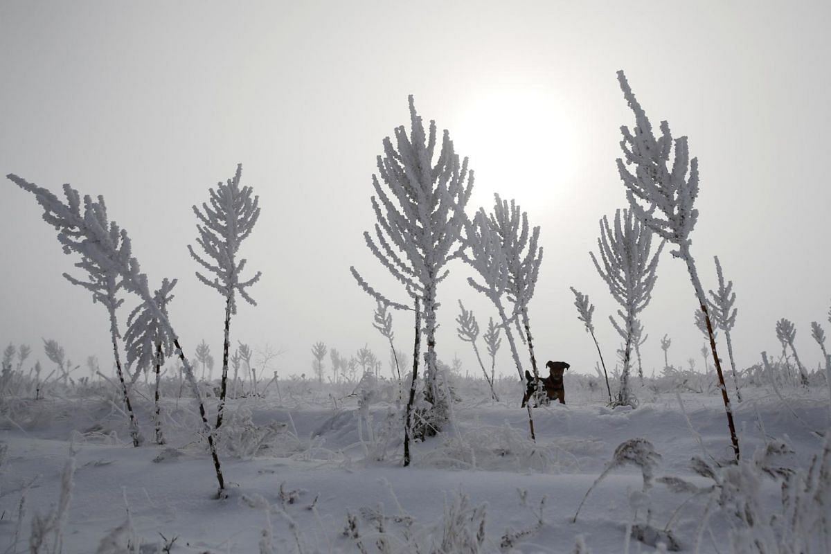 A dog stands amid hoar-frost covered vegetation on the bank of the Ili river on a foggy day outside Almaty, Kazakhstan, on Dec 1, 2019.