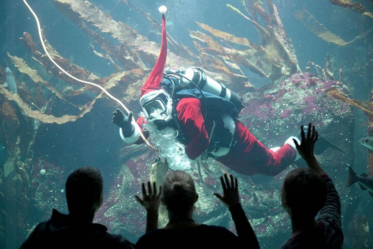 A diver dressed as Santa Claus feeds fishes on December 2, 2019 at the aquarium of the Multimar Wattforum national park centre in Toenning, northern Germany, during a rehearsal for a visitor event on St Nicholas Day. PHOTO: DPA VIA AFP