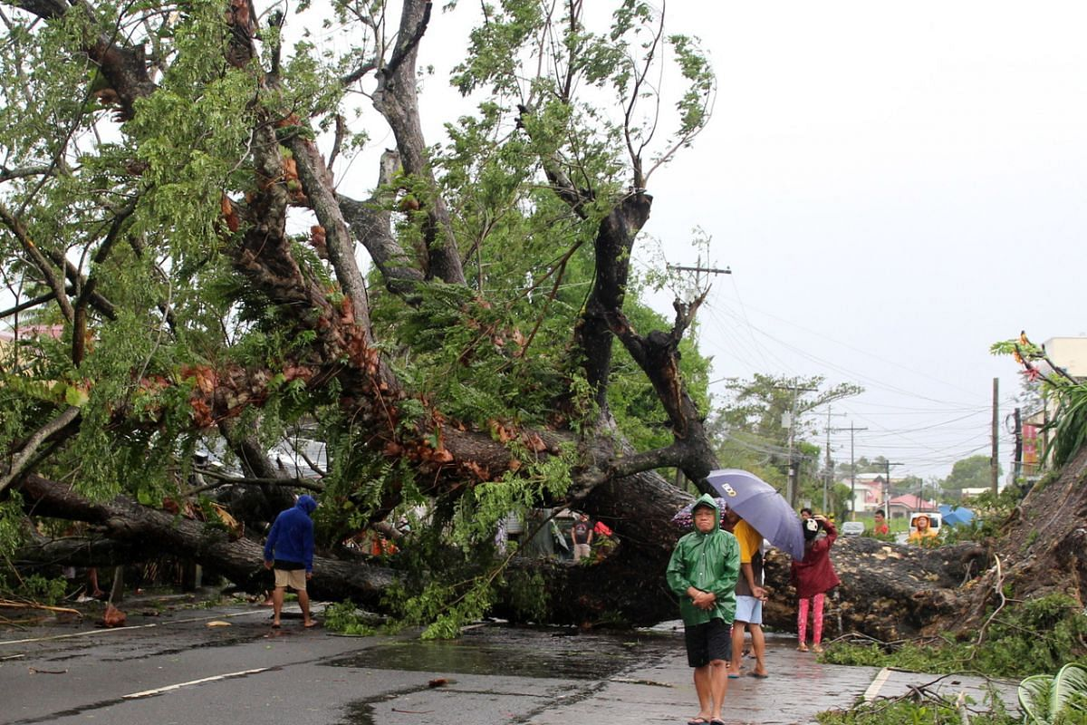 A fallen tree blocks a road in Naga city, Camarines Sur province, Philippines, on Dec 3, 2019.