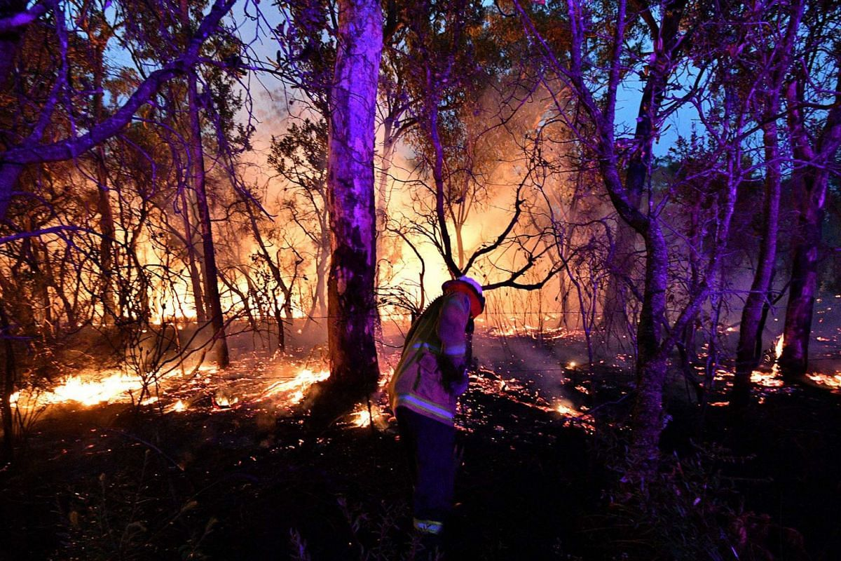 This photo taken on December 7, 2019 shows a firefighter conducting back burning measures to secure residential areas from encroaching bushfires at the Mangrove area, some 90-110 kilometres north of Sydney. PHOTO: AFP