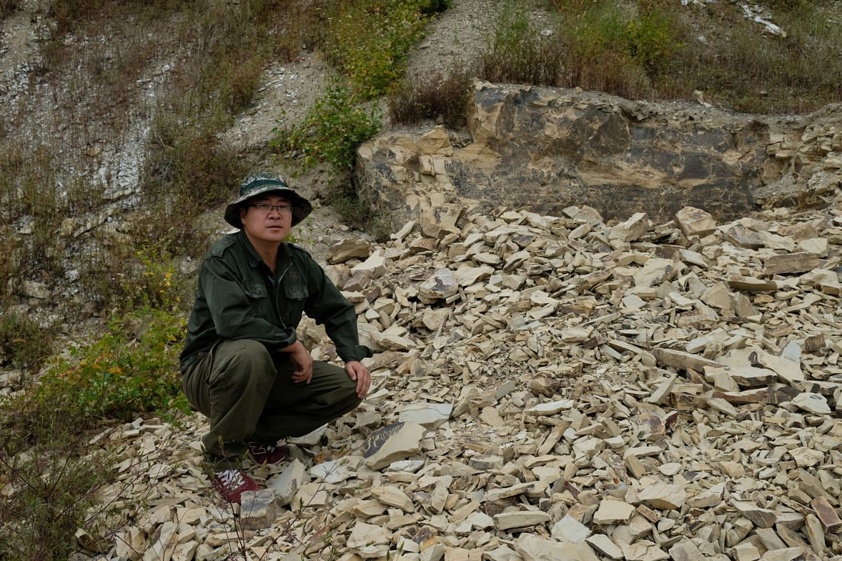 Mr Cui Dongmin, a park ranger at the Beipiao Bird Fossil National Nature Reserve, beside a heap of shale rocks, many of which hold fossilised remains of ancient creatures.