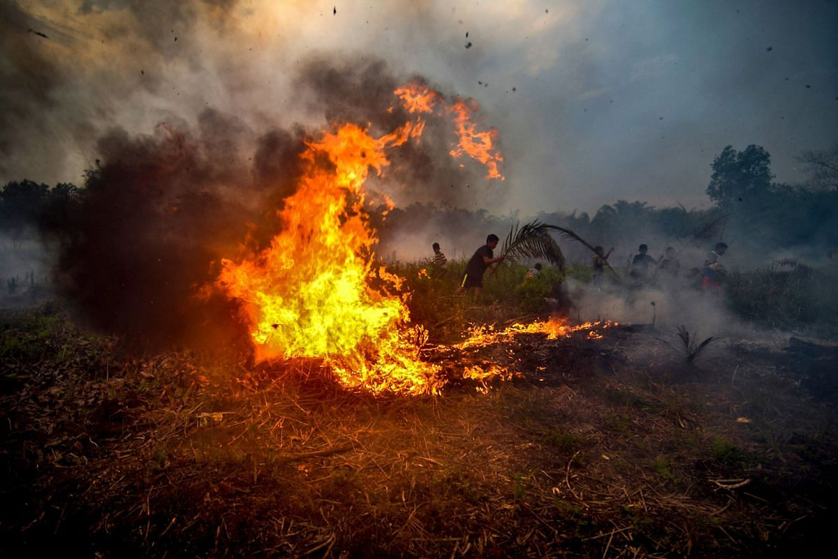 Children in Indonesia's Riau province trying to extinguish a peatland fire near their neighbourhood in October. Such fires are hard to douse as they can burn to a depth of 30m.