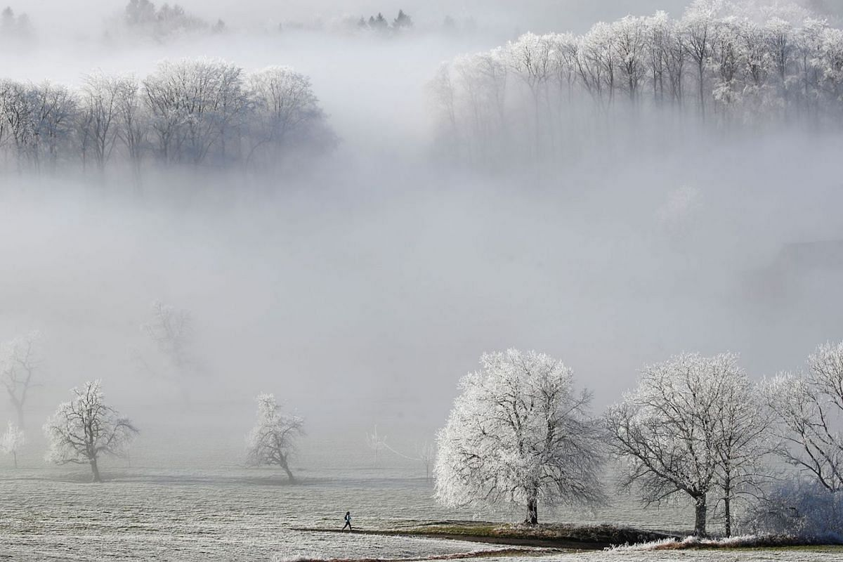 A jogger runs beside ice-covered trees near Albispass mountain pass, Switzerland January 2, 2020. PHOTO: REUTERS