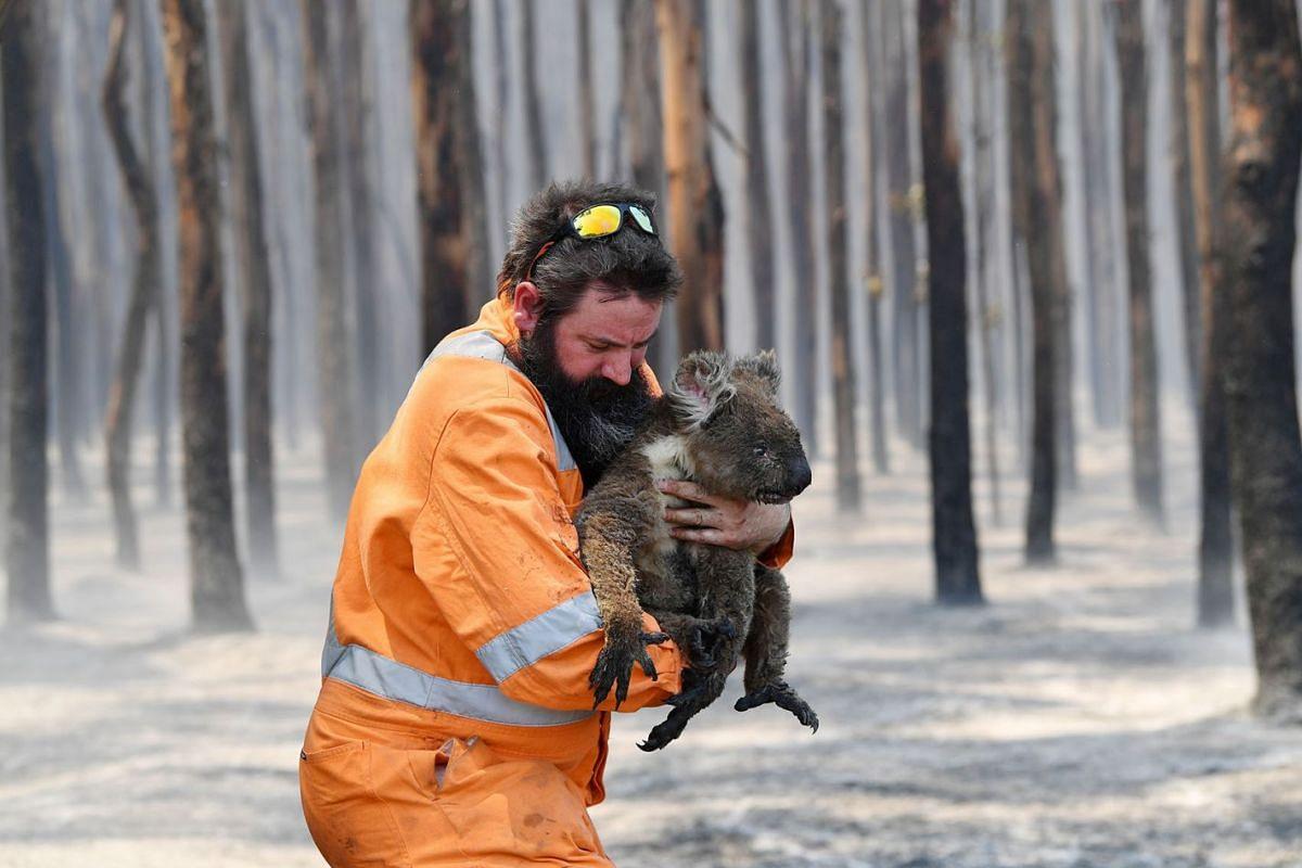 Adelaide wildlife rescuer Simon Adamczyk is seen with a koala rescued at a burning forest near Cape Borda on Kangaroo Island, southwest of Adelaide, Australia, Jan 7, 2020.