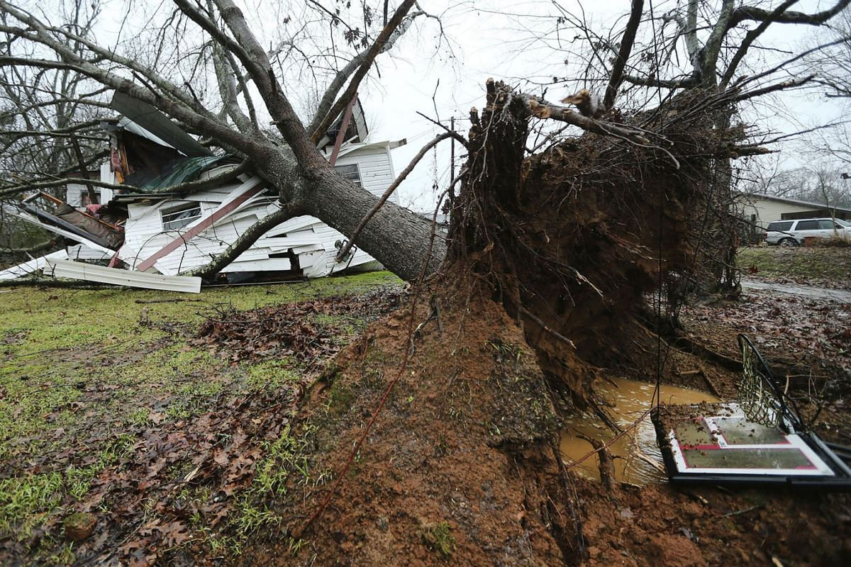 A downed tree rests on top of Anthony Dalrymple's home on Community Road in Baldwyn, Miss., after a small tornado moved through the area Saturday morning, Jan. 11, 2020. PHOTO: THE NORTHEAST MISSISSIPPI VIA AP