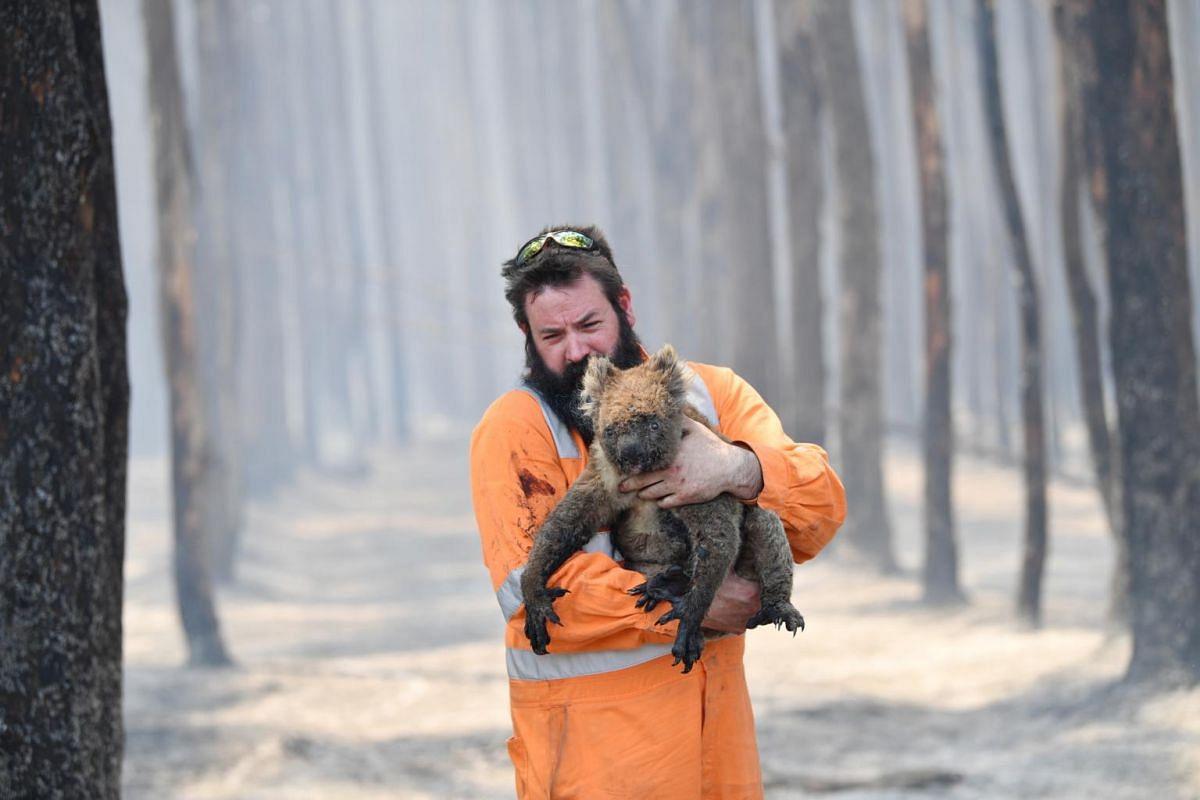 Adelaide wildlife rescuer Simon Adamczyk holds a koala he rescued at a burning forest near Cape Borda on Kangaroo Island, Australia, on Jan 7, 2020.