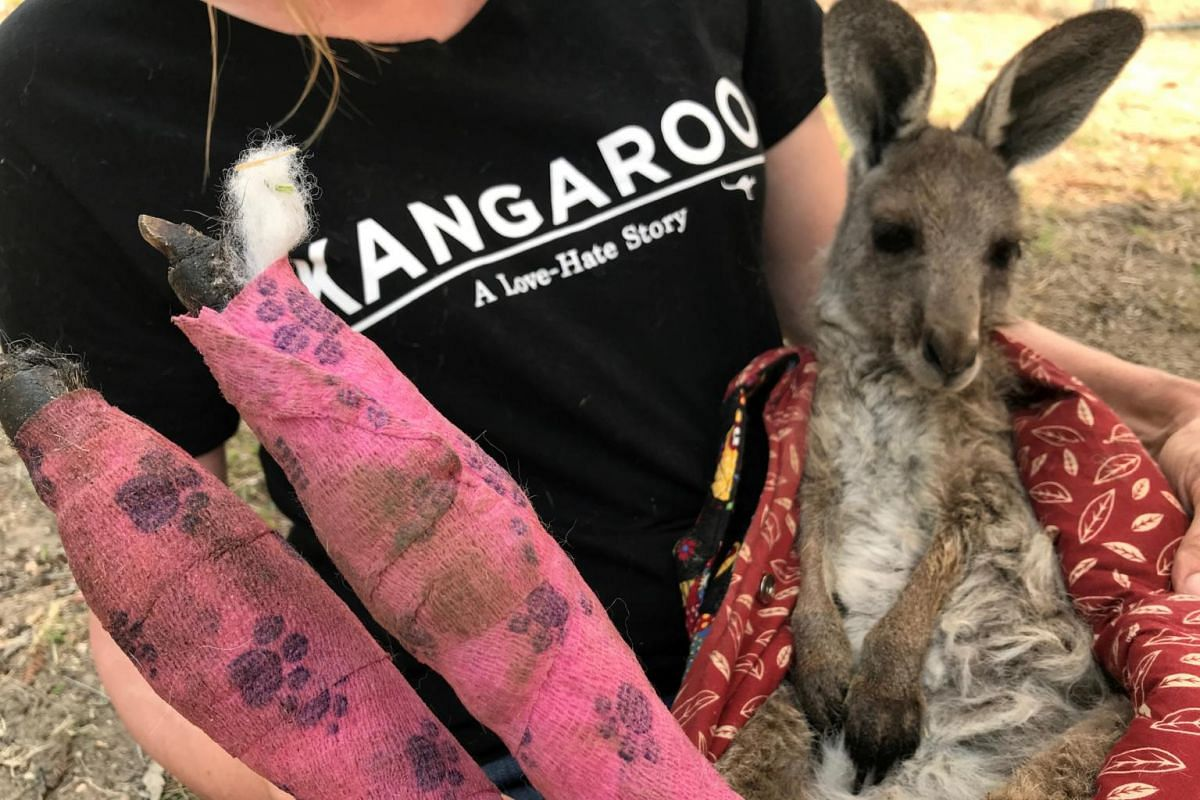 Wildlife Information, Rescue and Education Services volunteer and carer Tracy Dodd holds a kangaroo with burnt feet pads which was rescued from bush fires in Australia's Blue Mountains area, on Dec 30, 2019.