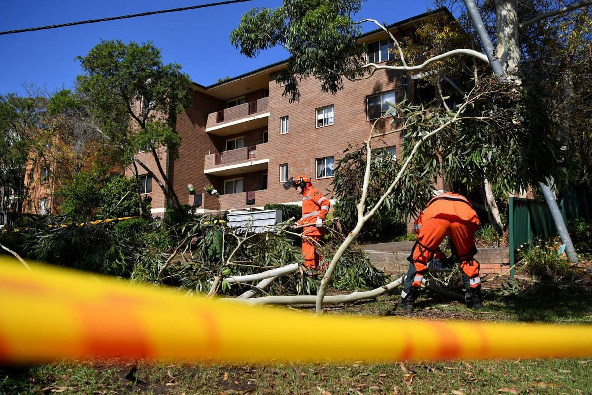 Members of the State Emergency Service removing a fallen tree from a property after a storm in Caringbah in Sydney on Jan 21, 2020.