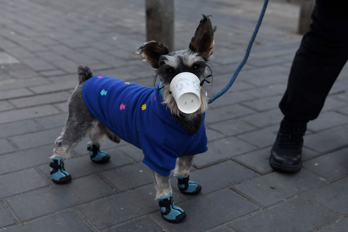 A dog wears a paper cup over its mouth on a street in Beijing, China, on Feb 4, 2020.