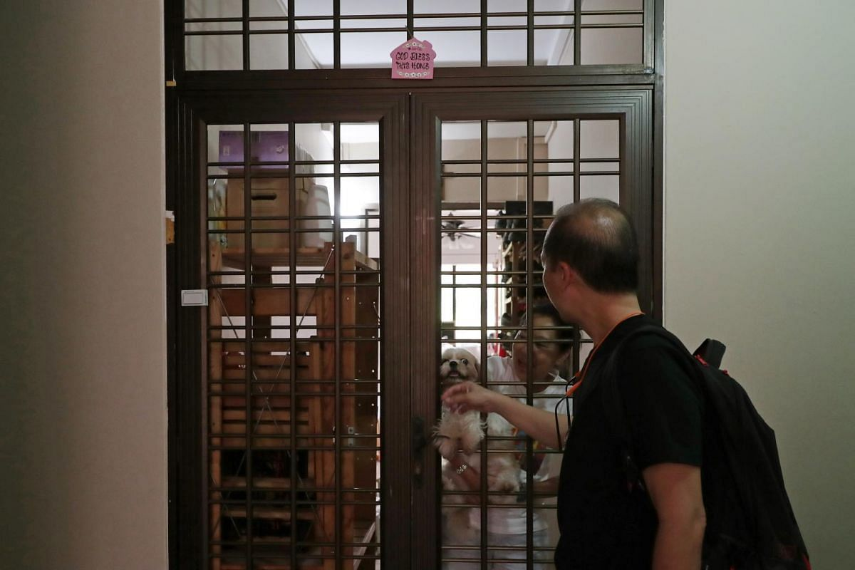 Held by Madam Lee (in white), their 10-year-old pet shih tzu hangs on the door to bid farewell to Mr Chan as he heads off to work.