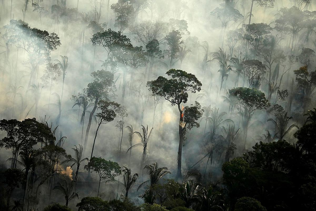 Smoke billowing from a fire in an area of the Amazon rainforest. The worry is that escalating deforestation, more severe droughts and fires will dry out the Amazon and turn it into a vast savannah, and a huge net source of CO2. A common squid swimmin