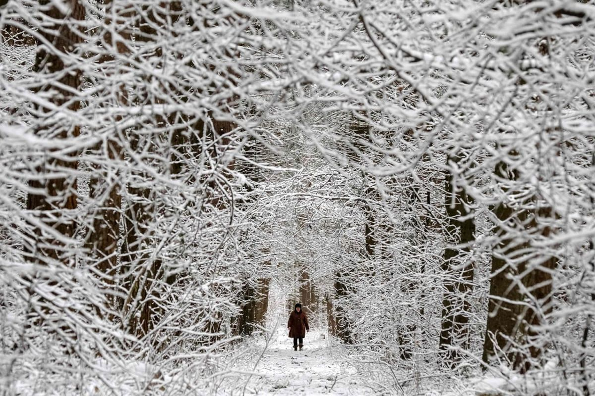 A woman walks in a forest road after a snowfall near a town of Chekhov some 70 km outside Moscow on March 15, 2020. PHOTO: AFP