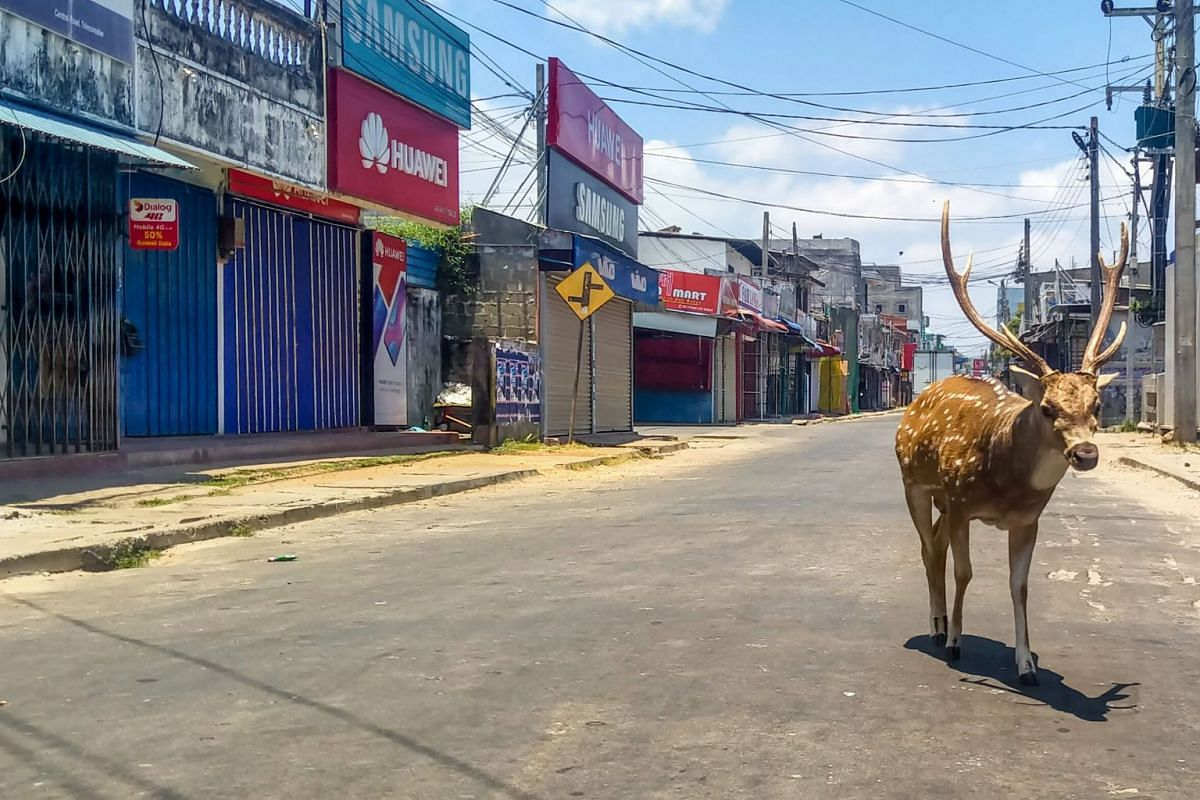 A wild deer roams in a deserted street during a government-imposed nationwide lockdown in the port city of Trincomalee, Sri Lanka, on March 31, 2020.