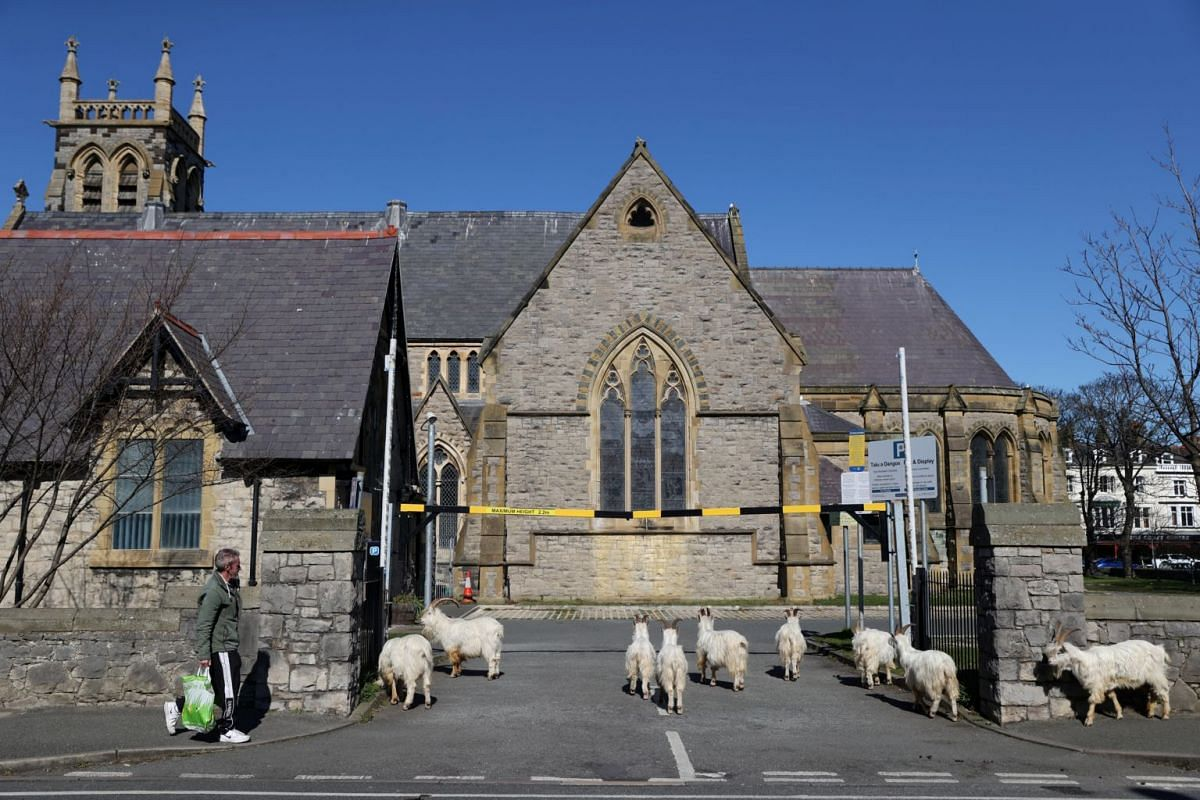 Goats are seen outside a church in Llandudno, Wales, on March 31, 2020.
