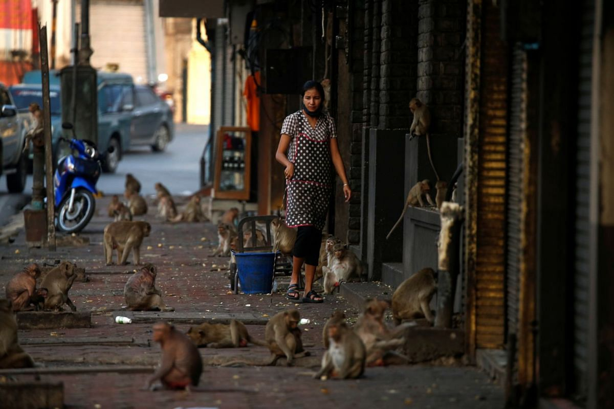A woman watches monkeys as they search for food in front of her shop near Prang Sam Yod temple in Lopburi, Thailand, on March 17, 2020.