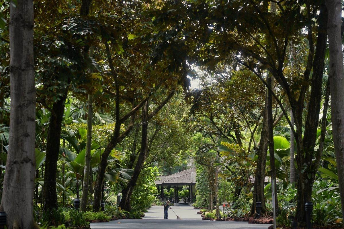 A cleaner sweeps the pavement at the Singapore Botanic Gardens on May 6, 2020.