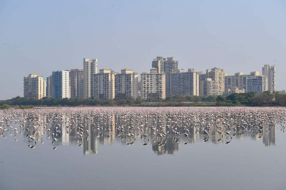 Flamingos are seen in a pond during a government-imposed nationwide lockdown, in Navi Mumbai, on April 20, 2020.