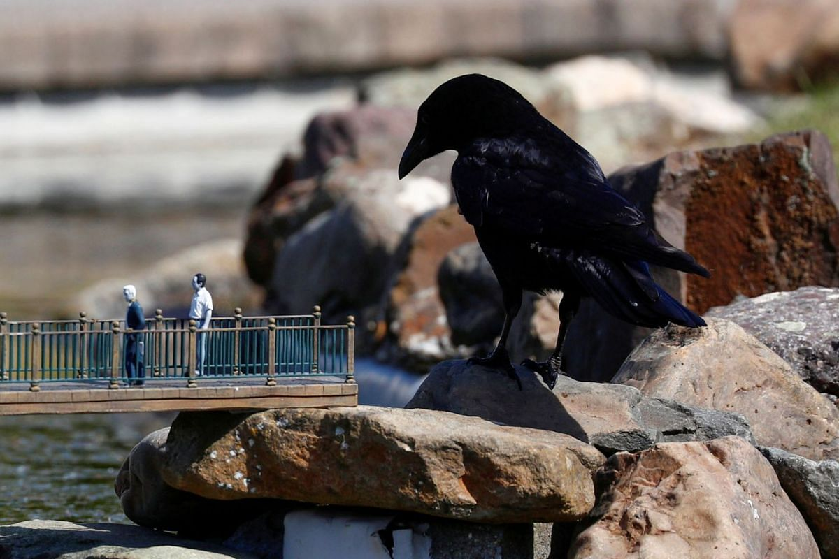 A crow is seen near models during the reopening of 'mini-Europe' theme park where people can wonder across small scale models of European capitals landmarks as Belgium began easing lockdown restrictions amid the coronavirus disease outbreak, in Bruss