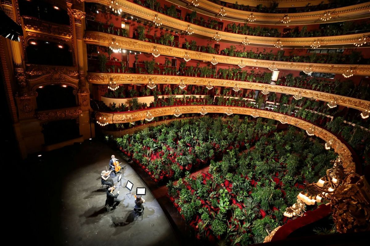 Nursery plants are seen placed in people's seats during a rehearsal as Barcelona's Gran Teatre del Liceu opera reopens its doors with a concert for plants to raise awareness about the importance of an audience after the lockdown, amid the coronavirus