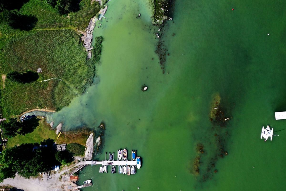 An aerial view of toxic blue-green algae bloom on the Baltic Sea coast at Tyreso near Stockholm, Sweden, June 25, 2020. PHOTO: TT NEWS AGENCY VIA REUTERS
