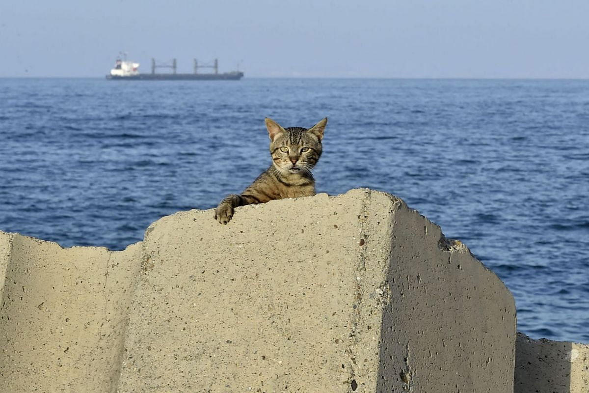 A cat is pictured at the sea front promenade before a curfew imposed by authorities to prevent the spread of the coronavirus in the Bab el-Oued district of Algeria's capital Algiers on June 29, 2020.  PHOTO: AFP