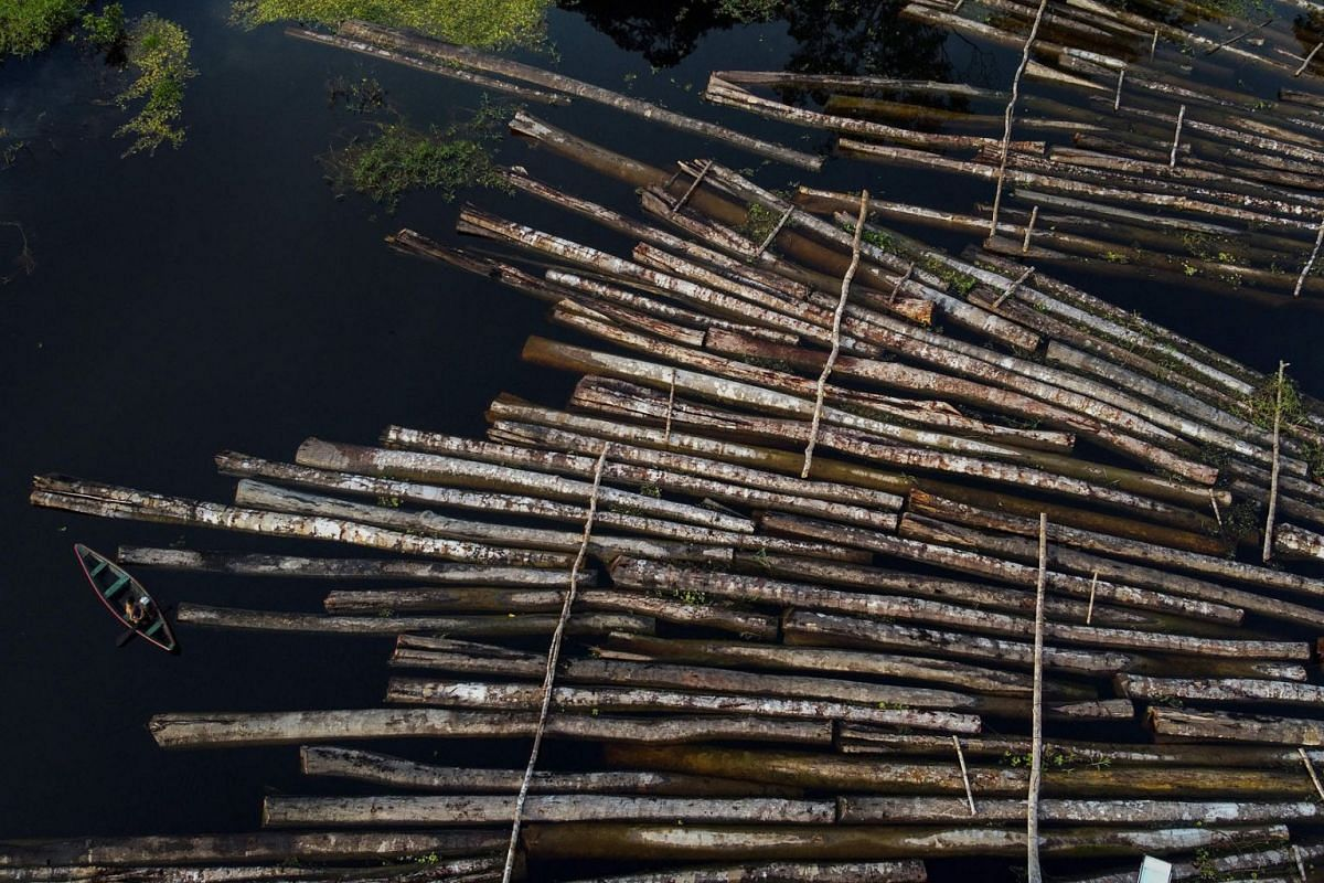 View of logs of wood seized by the Amazon Military Police at the Manacapuru River in Manacupuru, Amazonas State, Brazil on July 16, 2020. PHOTO: AFP