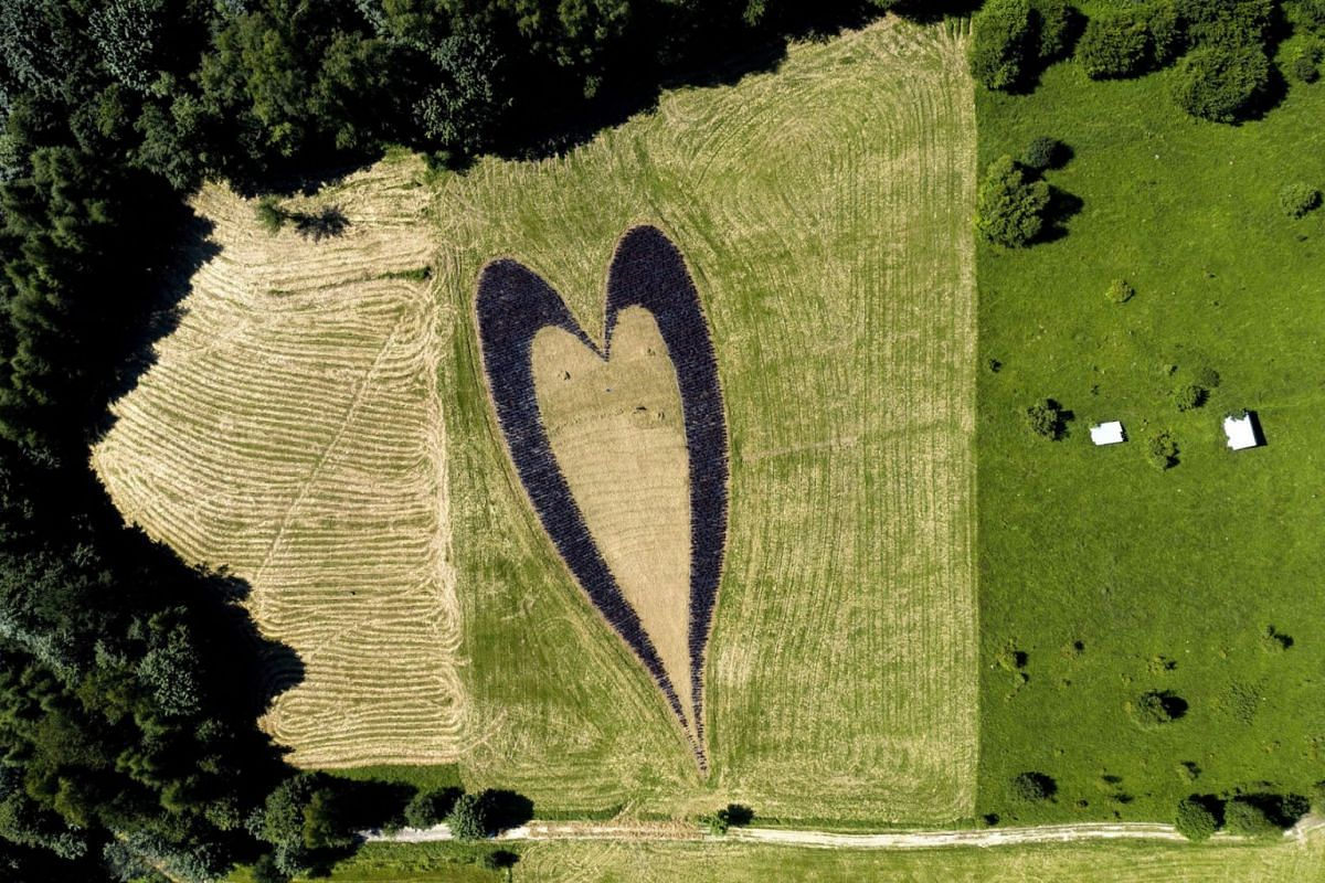 A photo taken with a drone shows an aerial view of the heart of shrubs in a meadow by Lake Myczkowieckie in Solina, south east Poland, July 16, 2020. PHOTO: EPA-EFE