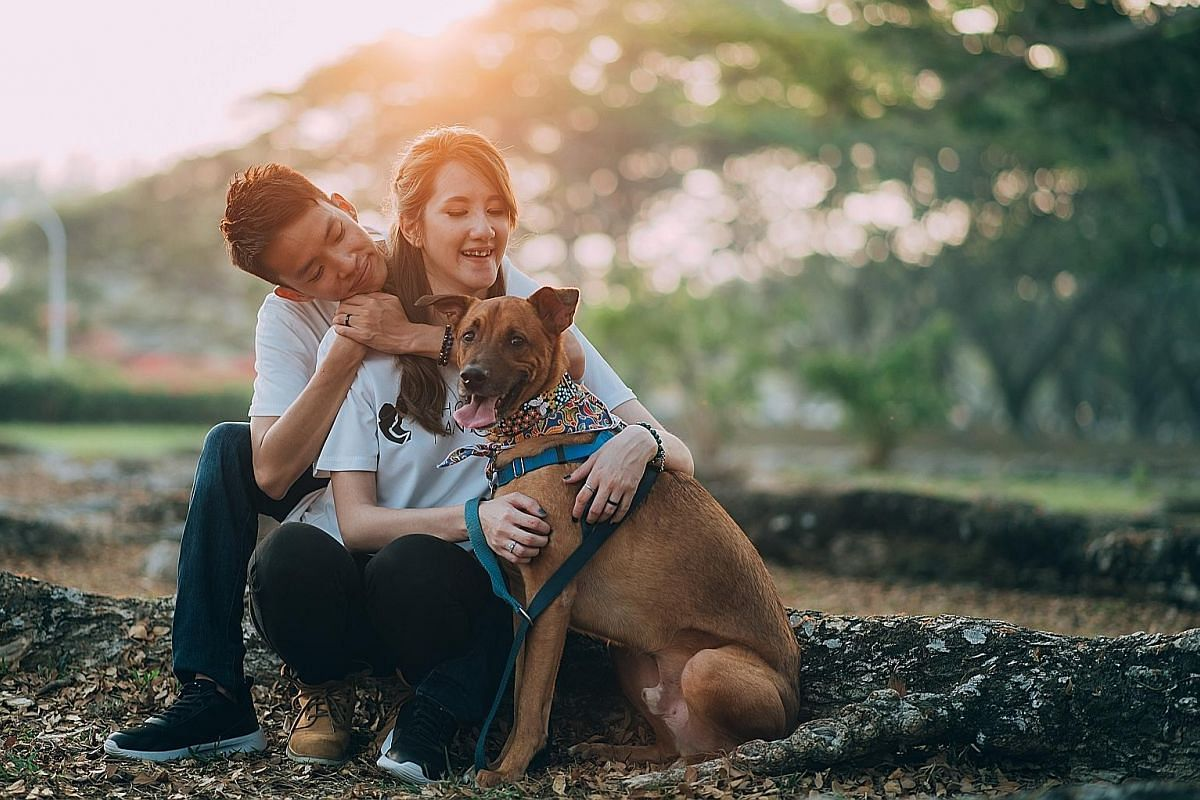 Ms Melodee Tan and her fiance Dominic Neo, both of non-profit advocacy group Hope for Animals, have been organising online adoption drives for animal shelters.