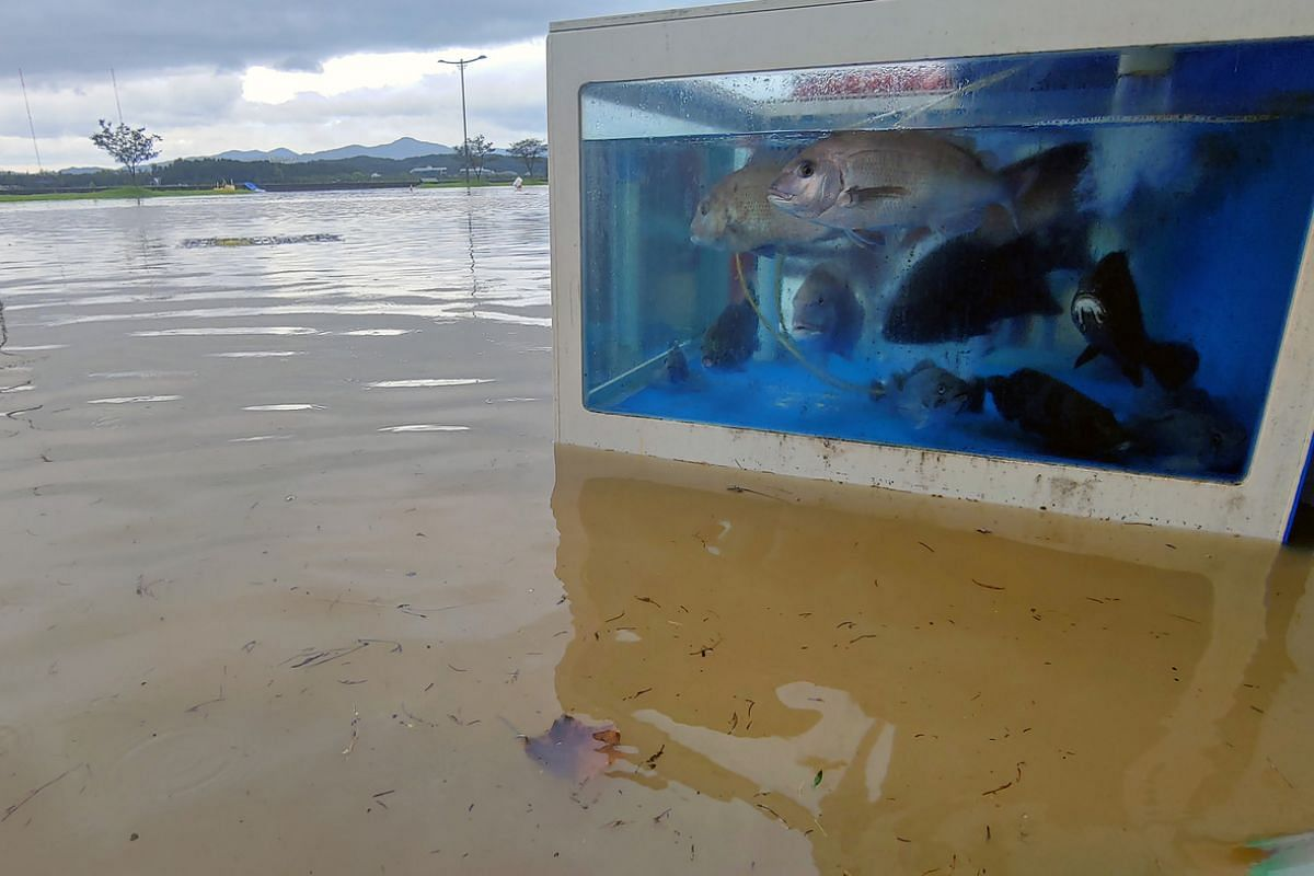 A submerged street in the aftermath of Typhoon Maysak in Gangneung, South Korea, on Sept 3, 2020.