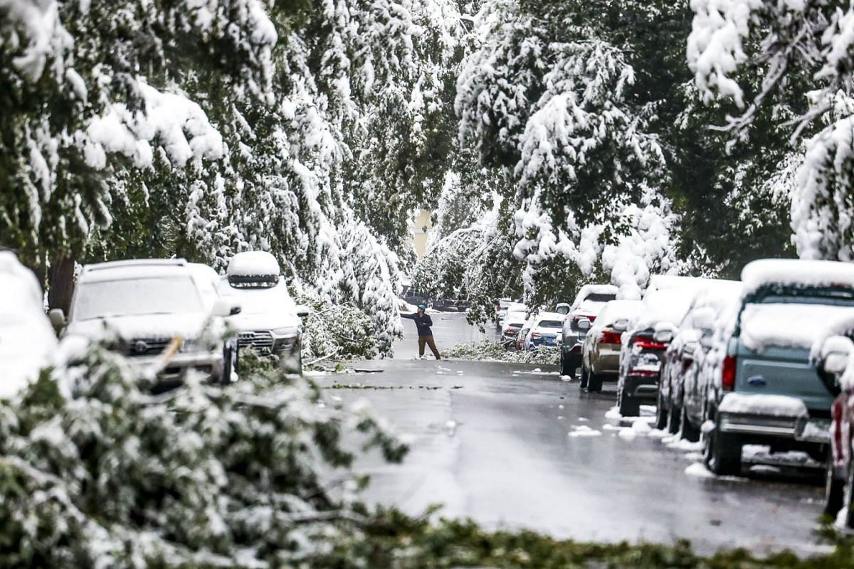 A man attempts to clear branches of snow during an early season winter storm on September 9, 2020 in Boulder, Colorado. PHOTO: GETTY IMAGES/AFP