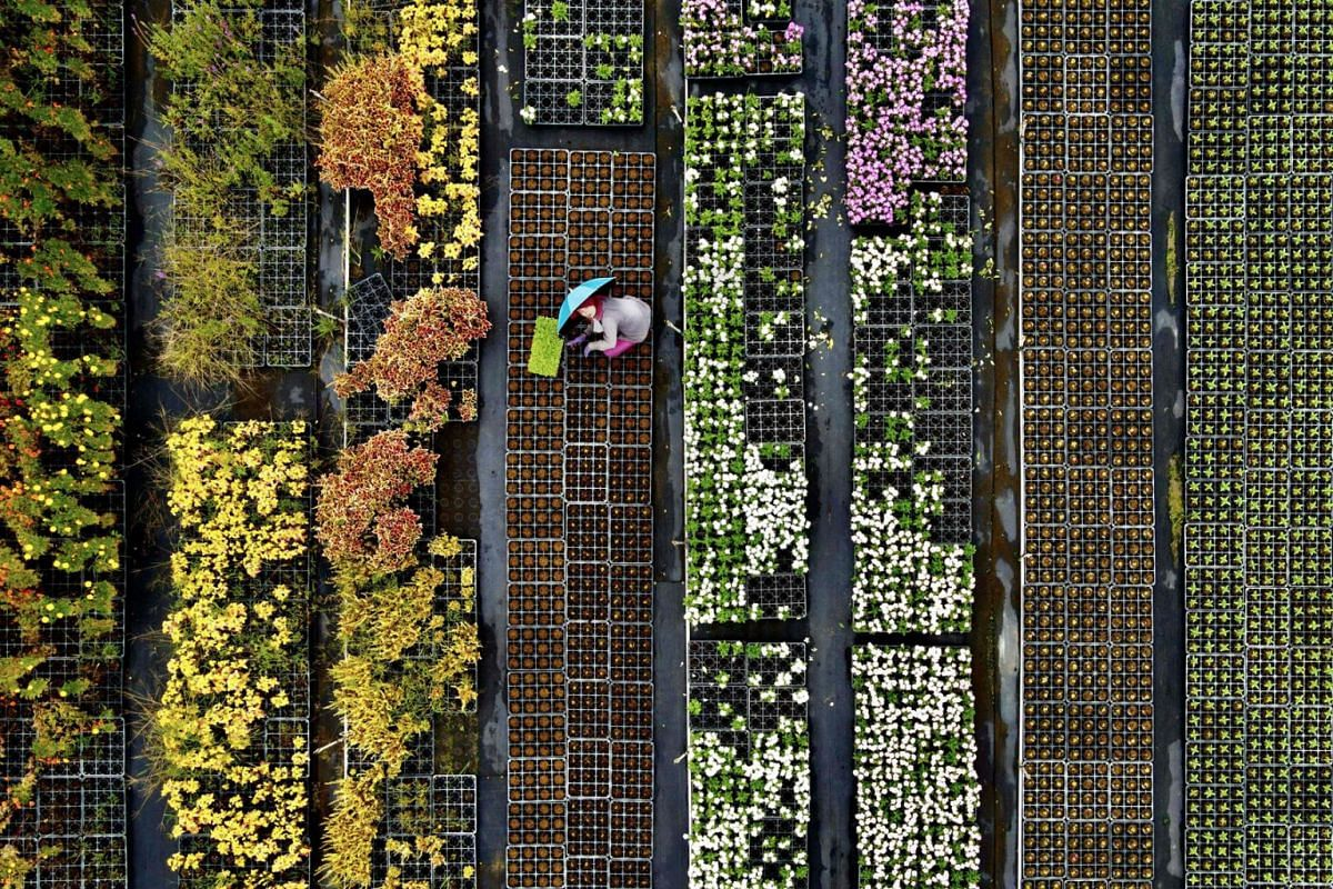 This aerial view shows a farmer sorting potted plants in the Daxi district of the northern city of Taoyuan on September 10, 2020. PHOTO: AFP