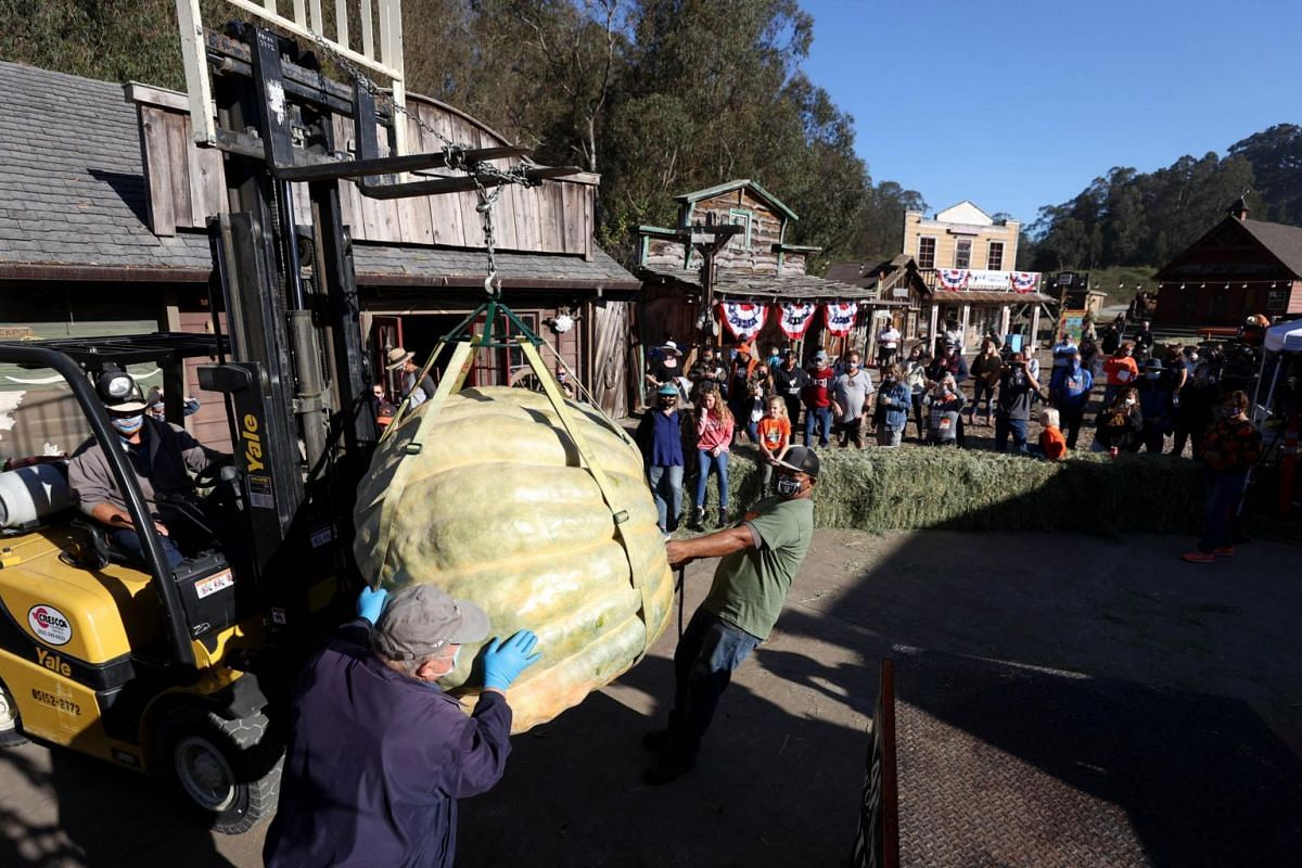 Workers use a forklift to move a large pumpkin during the Safeway World Championship Pumpkin Weigh-Off in Half Moon Bay, California, on Oct 12, 2020.