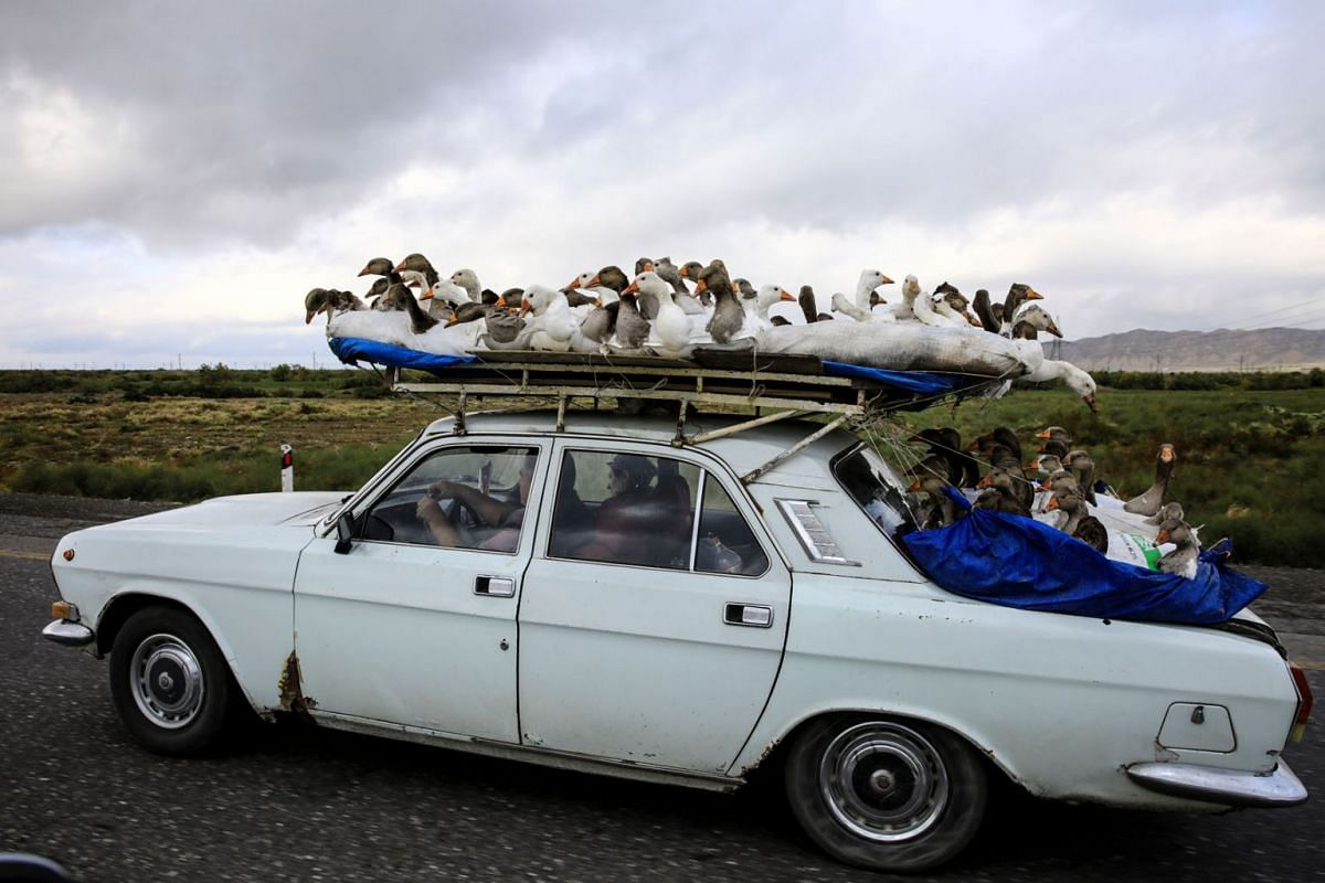 A man carries gooses on top of his car as he drives on a highway that leads to the city of Ganja, Azerbaijan October 21 2020.