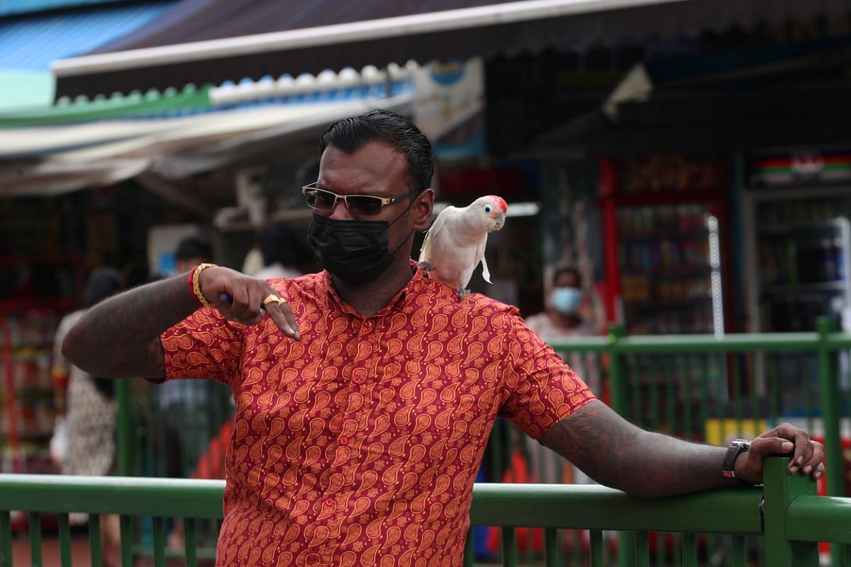 #NEW NORMAL: On June 19, 2020, the first day of Phase 2, a man is seen along Buffalo Road with his pet parrot on his shoulder. While retail operations resume and buzz returns to Little India, people have been encouraged to keep safe distances apart,