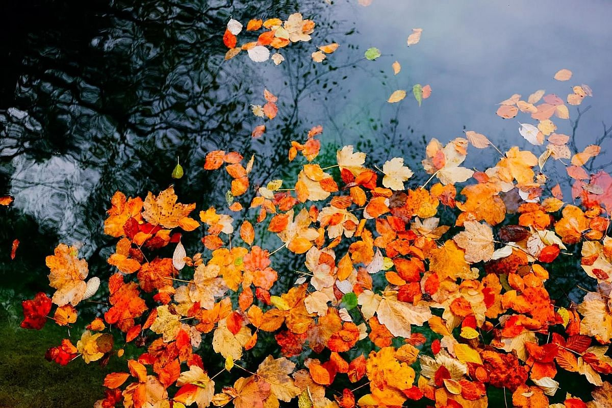 LI MING:Autumn shows us how beautiful it is to let it go. Recovery isn't linear. There will be days where you find yourself spiralling down again. It's easy to forget how far we have come especially in times of darkness. But then again, without the d