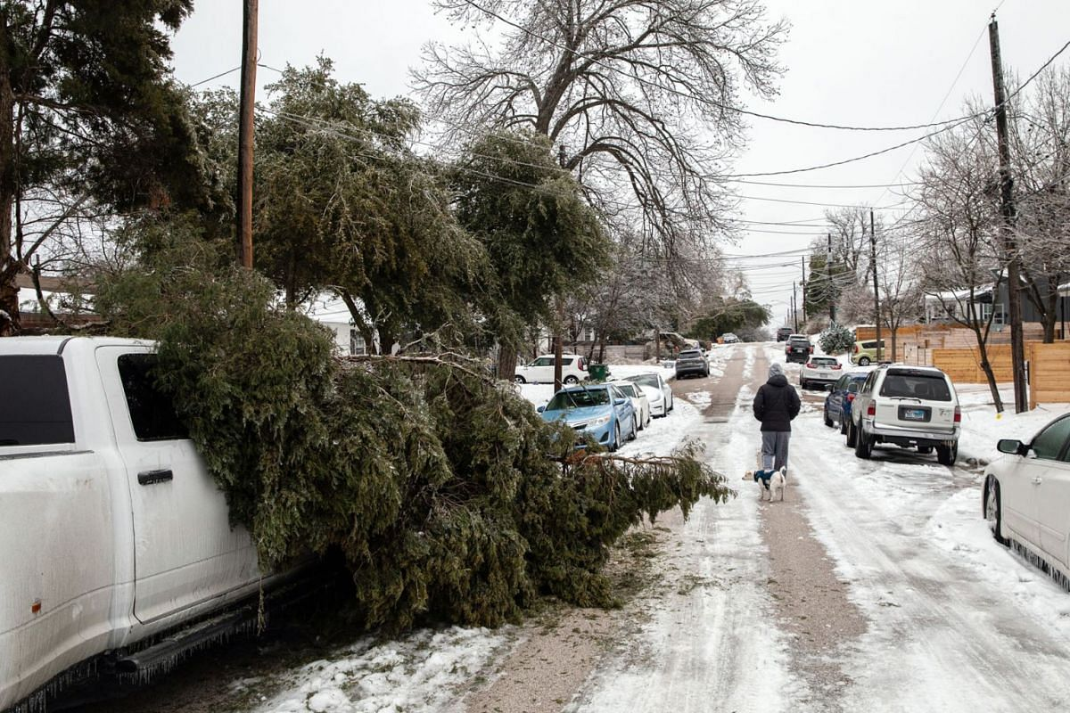 A man walks his dog, Feb 18, 2021, past a tree limb that fell onto a truck in Austin, Texas. Amid widespread power losses, millions of Texans were also advised to boil their water for safety.