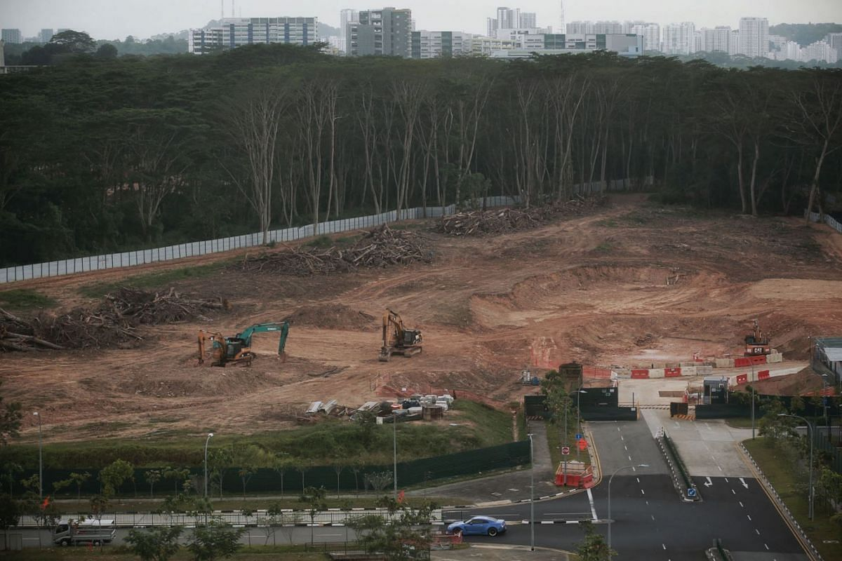 One of two plots of forested land at Kranji Road on Feb 22, 2021, after much of the site was mistakenly cleared.